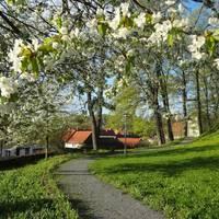 Schloßpark Elbingerode im Frühling